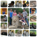 {Photo A Day} Zoo Collage