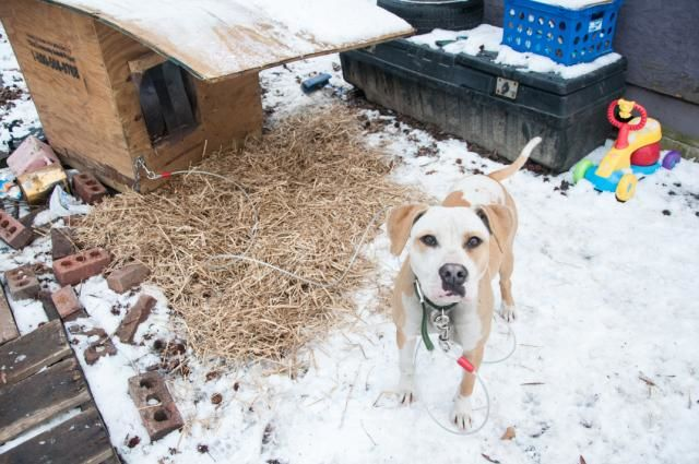 Give Cold Dogs Some Comfort this Holiday Season