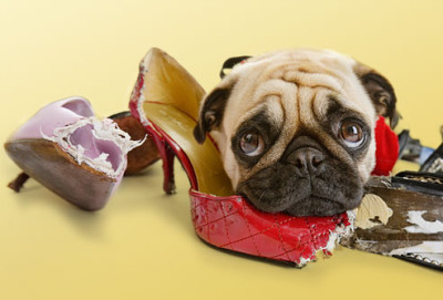 5 Common Pet Problems & How to Fix Them
