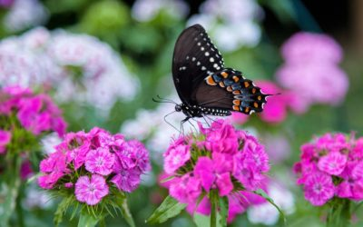 How to Make Your Back Yard More Nature Friendly